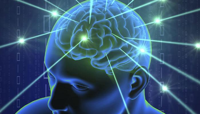 हमारे मस्तिष्क का 'विशिष्टता' याददाश्त और बौद्धिकता को करता है प्रभावित
