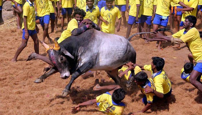आज से तमिलनाडु विधानसभा का सत्र, पेश होगा जल्लीकट्टू विधेयक