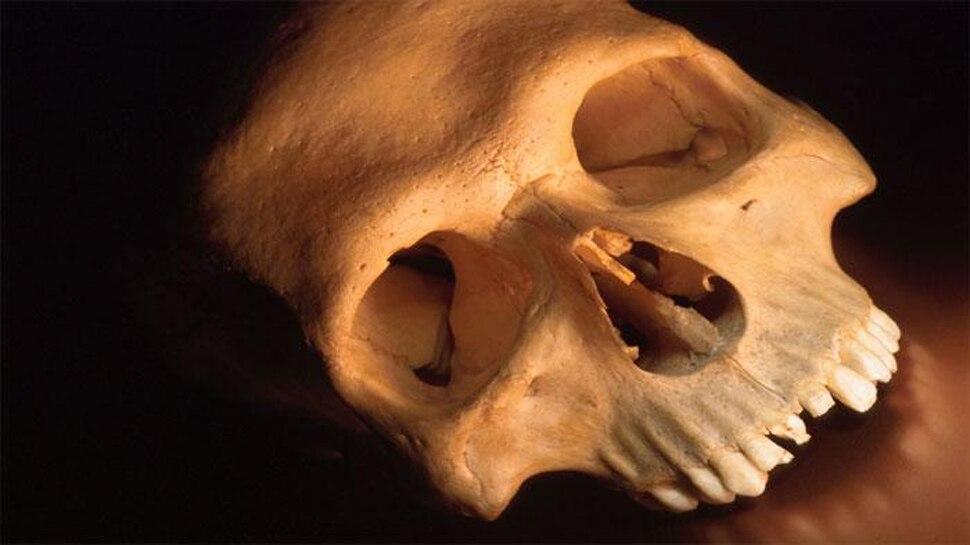6,000 साल पुरानी मानव खोपड़ी का रहस्य जानकर आप चौंक जाएंगे