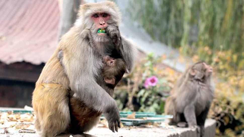 Vice President Venkaiah Naidu also victim of Monkey incitement