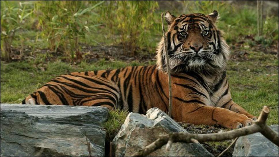 बाघों के पर्यावास की सुरक्षा के लिए सरकार ने कई कदम उठाए हैं : केंद्रीय मंत्री हर्षवर्द्धन
