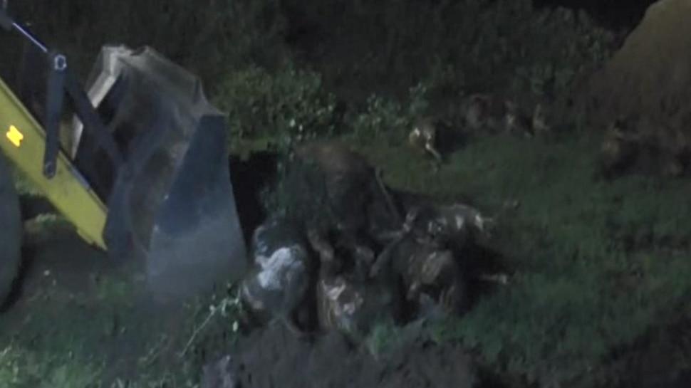 छत्तीसगढ़ः खाना-पानी न मिलने से 30 गायों की मौत