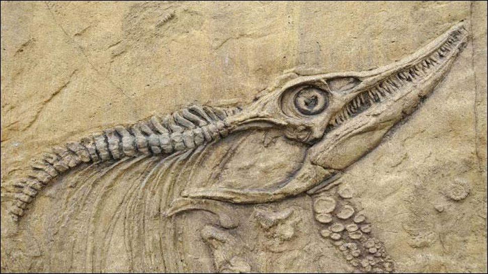 DNA विश्लेषण से चल सकता है पता कि कैसे दिखते थे डायनासोर