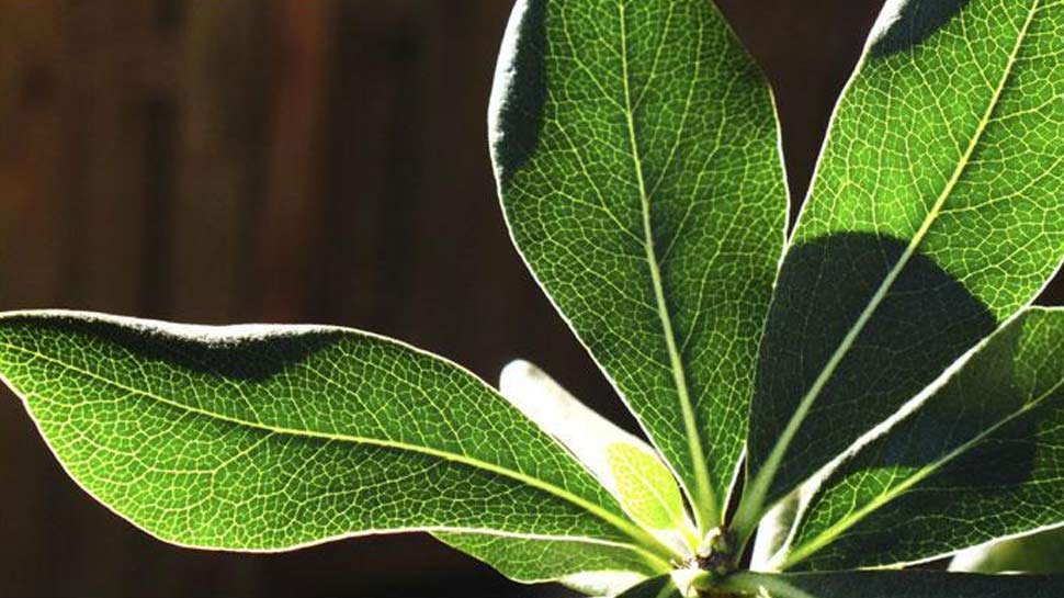houseplants as a way to purify the air
