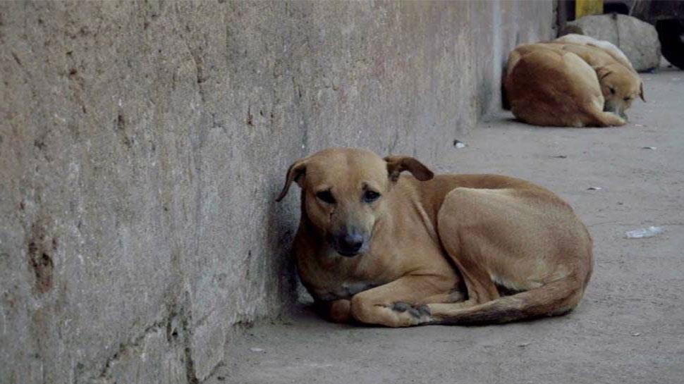 कर्नाटक : आवारा कुत्तों की हत्या पर लगेगा रोक! HC जल्द करेगा सुनवाई