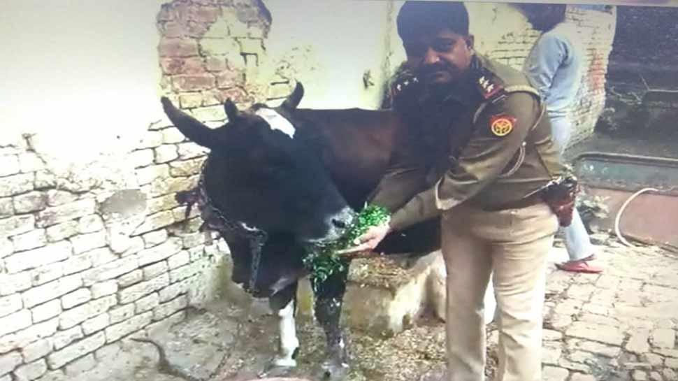 अलीगढ़ पुलिस चली योगी की राह, इंस्पेक्टर जावेद खां ने दिया आवारा गौवंश को सहारा