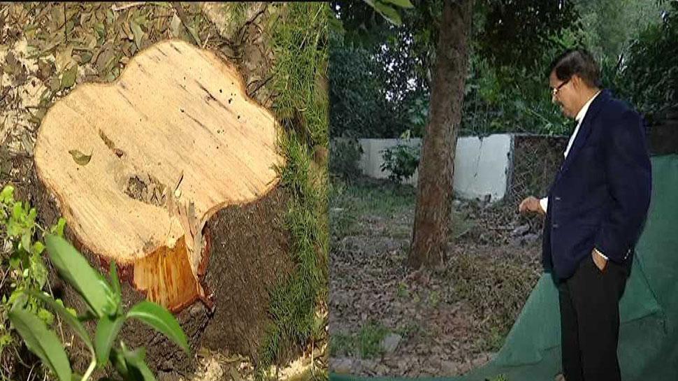 कोटा: जज साहब के बंगले से चोरी हुआ चंदन का पेड़, पुलिस के उड़े होश