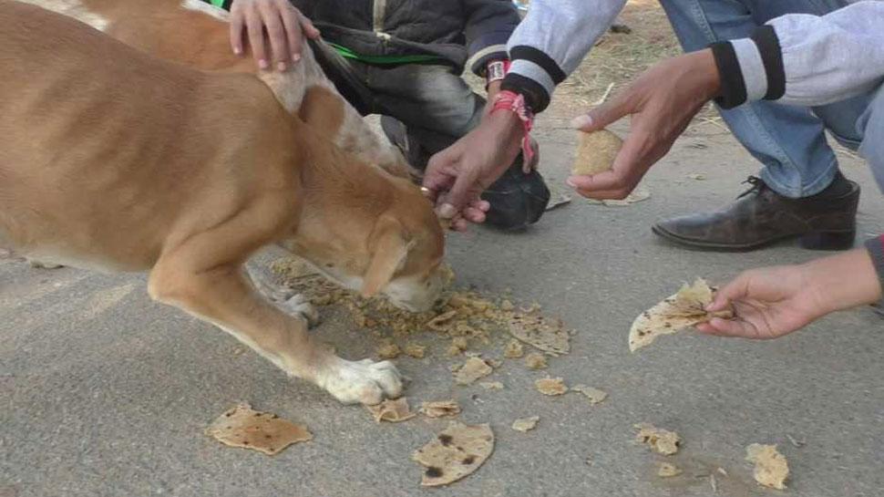मेहसाणा में यहां है रोटी घर, जहां रोज कुत्तों के लिए बनती है 3400 रोटियां