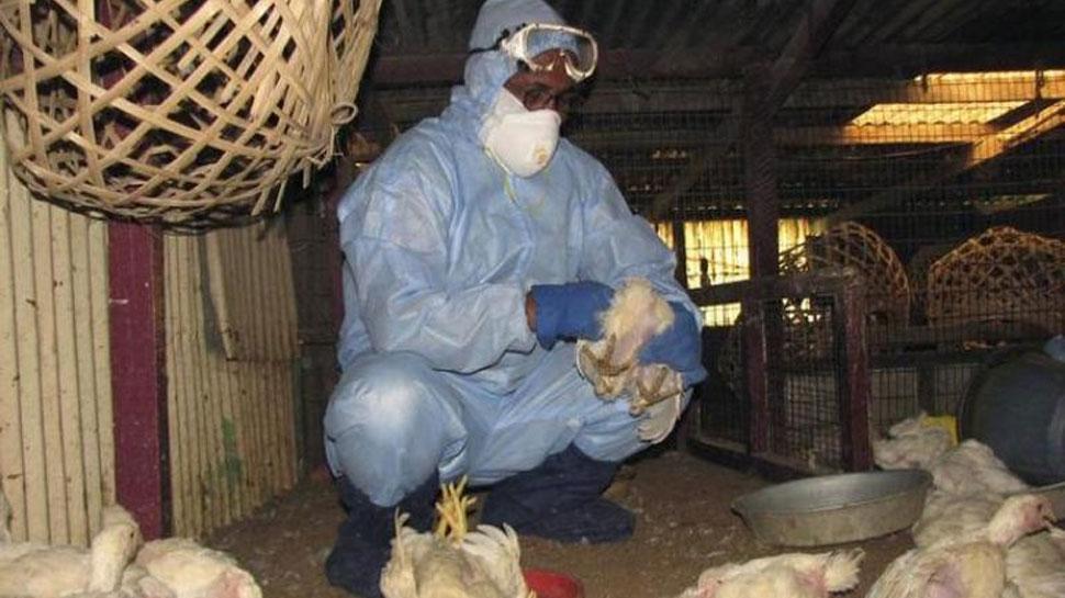 बर्ड फ्लूः बिहार के कई जिलों में 60 कौवों की मौत, नष्ट किए गए 2600 मुर्गियां