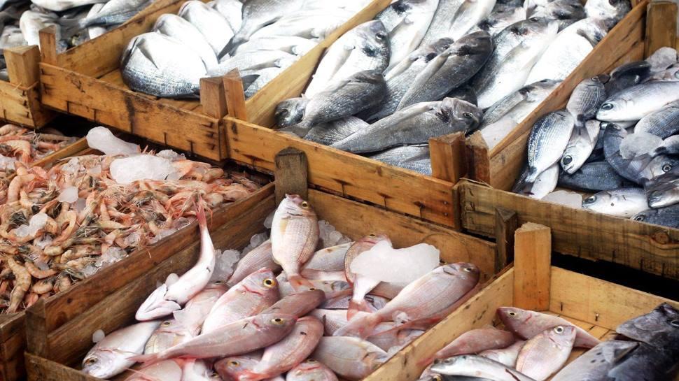 बिहार: 10 मानकों पर फेल हुई आंध्र प्रदेश से आने वाली मछली, लग सकती है रोक