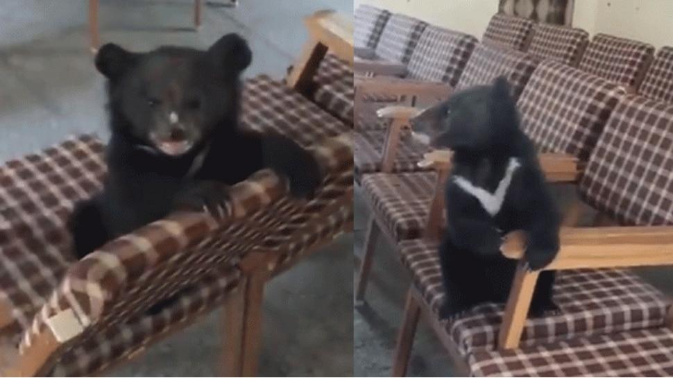OMG! कुत्ते का पिल्ला समझ जंगली जानवर घर ले आया शख्स, असलियत जान उड़ गए होश