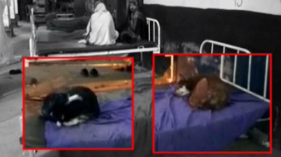 नवादा: अस्पताल में मरीजों के लिए बेडशीट नहीं लेकिन कुत्ते यूं फरमा रहे आराम