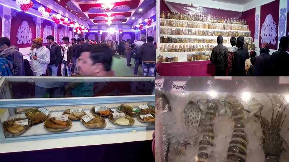 पं बंगालः दीघा में शुरू हुआ 'Sea Food Festival', मछलियों की 180 प्रजातियों की प्रदर्शनी