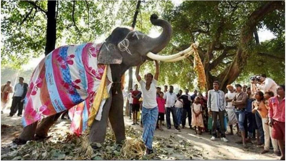 पश्चिम बंगालः बांग्लादेश से भारत घूमने आए पर्यटक की हाथी के कुचलने से मौत