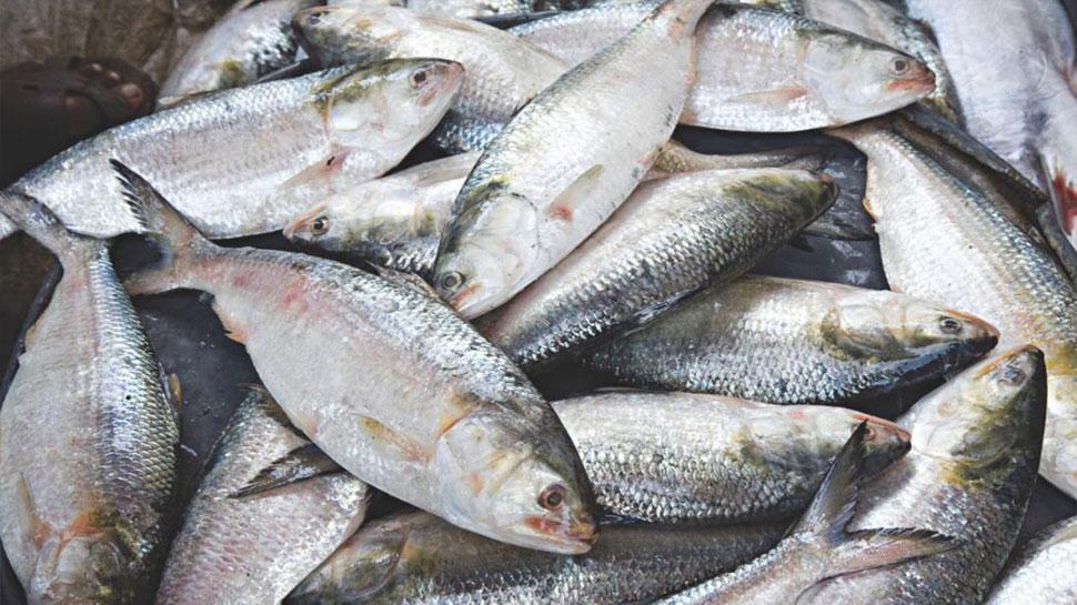 सूखे की मार झेल रहे ऑस्ट्रेलिया में हजारों मछलियों की मौत, दोबारा हुई घटना