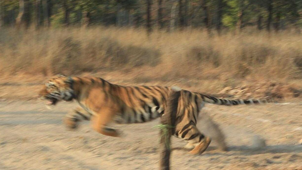 After holding the Sarni, kept in Kanha for 2 months