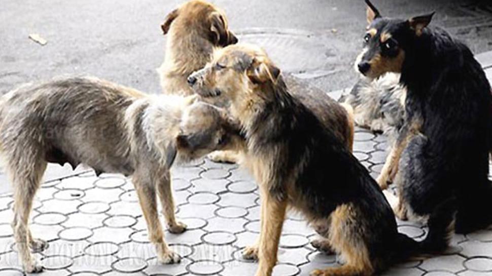 आवारा कुत्तों के हमले से तीन साल के बच्चे की मौत
