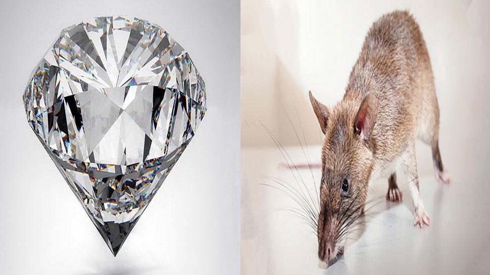 ज्वेलरी शॉप से हीरा लेकर फरार हो गया चूहा, फिर भी दुकानदार ने जताई खुशी