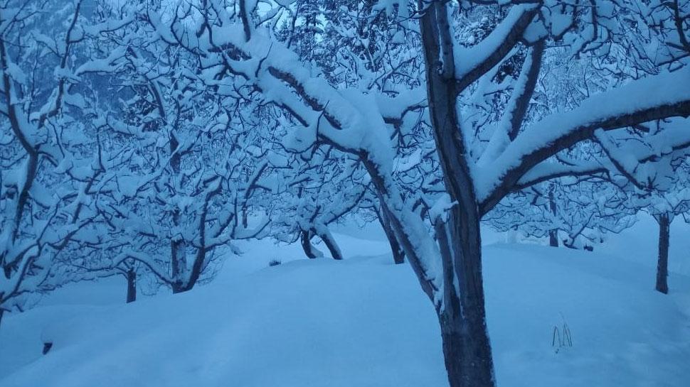 snowfall in Himachal Pradesh-5