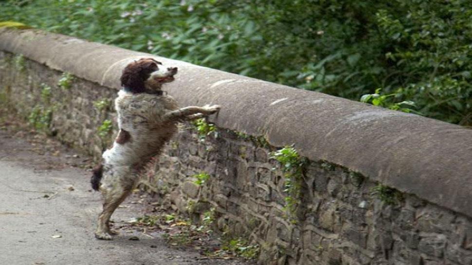 एक पुल का वह रहस्यमयी आकर्षण जहां खिंचे चले आते हैं कुत्ते और...