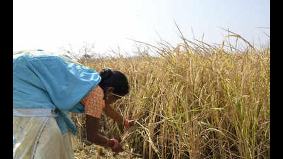 बीजेपी का गढ़ रही राजकोट लोकसभा क्षेत्र में कृषि संकट है बड़ा मुद्दा