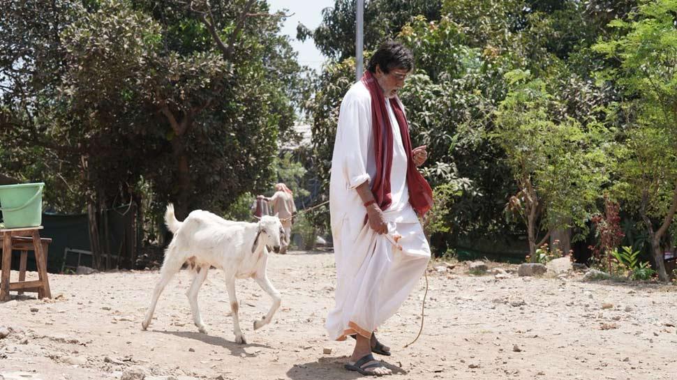 शाहरुख ने मांगी पार्टी तो बकरी चराने निकल पड़े अमिताभ बच्चन, वायरल हुआ बिग बी का अंदाज