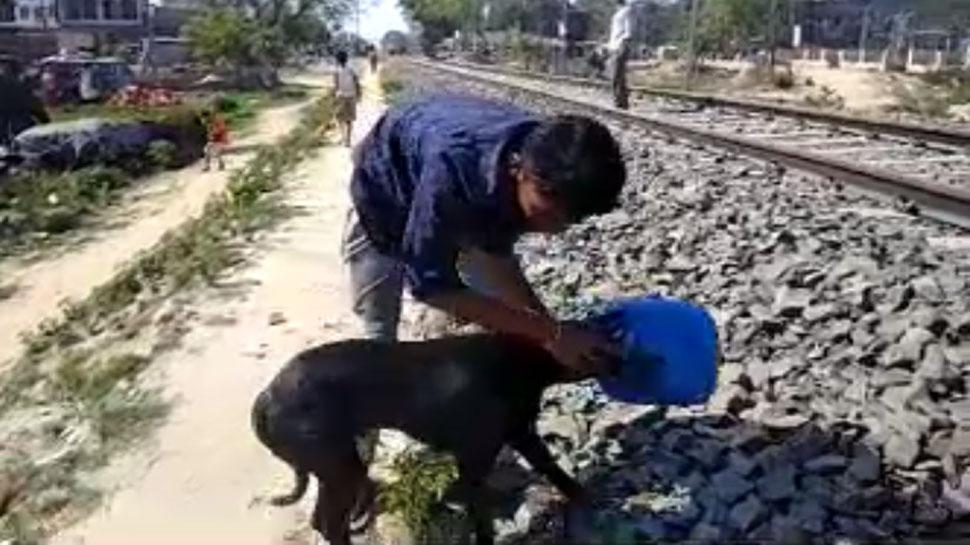रेल ट्रैक पर खड़े कुत्ते के सिर में फंसा पानी का डब्बा, लोगों ने ऐसे किया रेस्क्यू