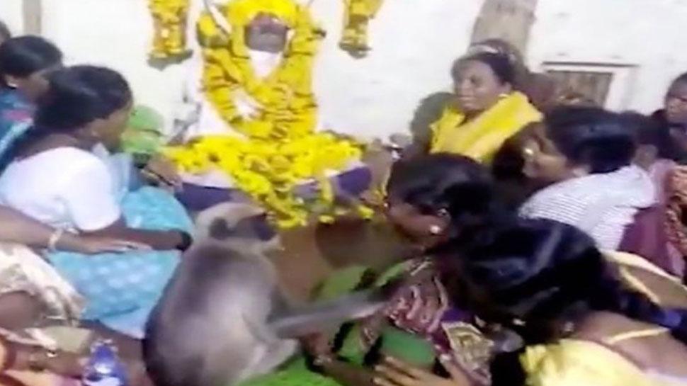 शोक सभा में बंदर बना लोगों का सहारा, आंसू पोछकर कराया चुप, इमोशनल कर देगा VIDEO
