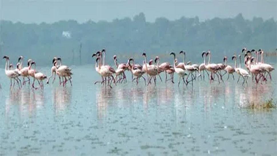 आखिरी सांसे गिन रहा प्रवासी पक्षियों का घर बिहार का 'कावर झील पक्षी विहार'
