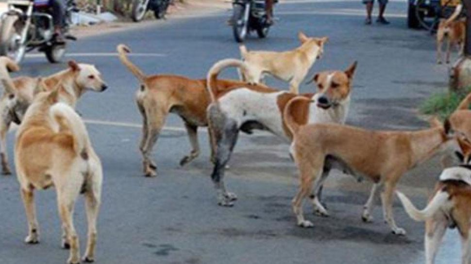 बिजनौर में कुत्तों के झुंड ने वृद्ध किसान पर किया हमला, मौत