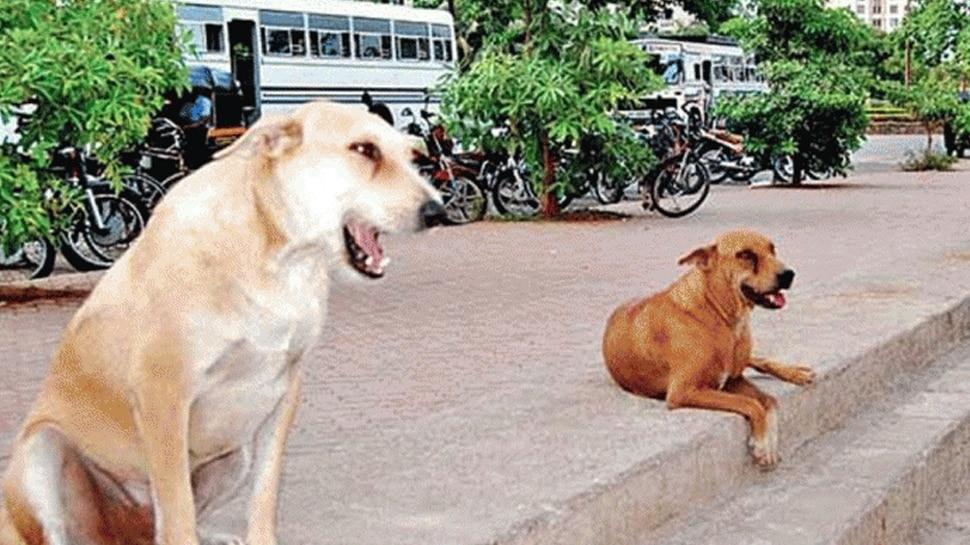 आवारा कुत्तों ने बनाया 6 साल के मासूम को निवाला, मां के सामने नोच-नोच कर ले ली जान