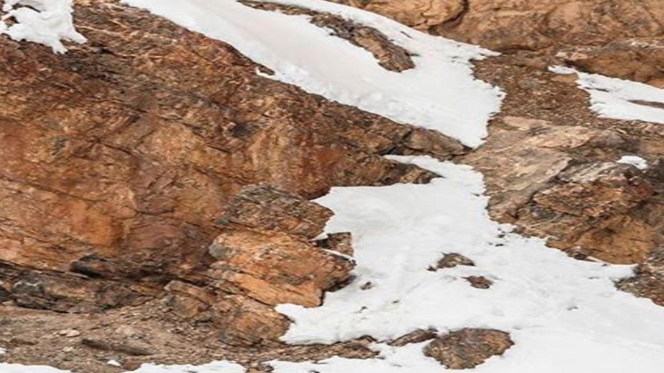इस Viral Photo में छिपा है Snow Leopard, क्या आपको दिखा?