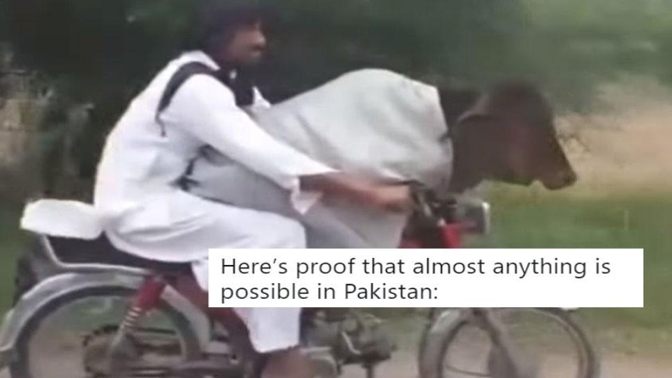 गजब का जुगाड़: बाइक पर गाय बिठाकर ले जा रहा पाकिस्तानी, सोशल मीडिया पर उड़ा मजाक