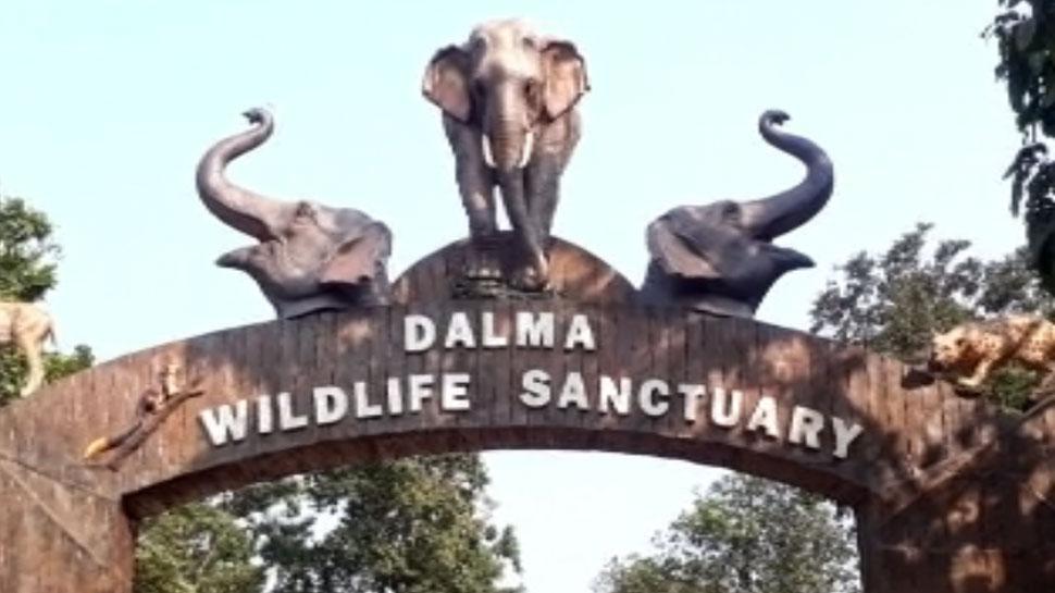 दलमा वाइल्ड लाइफ सेंचुरी में 2018 की तुलना में जानवरों की संख्या में हुआ है इजाफा