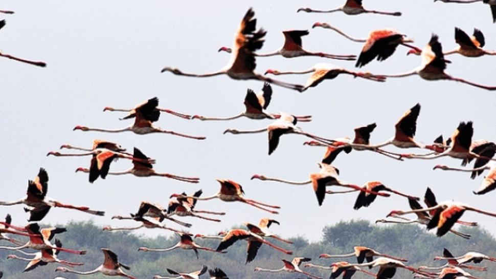 छत्तीसगढ़ः इन विदेशी पक्षियों को गांव वाले मानते हैं शुभ, बोले- इनके आने से बारिश अच्छी होती है