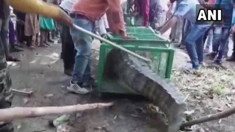 गुजरात में मंदिर में घुसा मगरमच्छ, ग्रामीणों ने वन विभाग के बचाव अभियान का किया विरोध