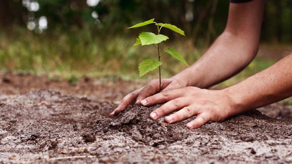 राजस्थान: सरकारी स्कूलों में जितने नामांकन होंगे, उतने ही लगाए जाएंगे नए पौधे