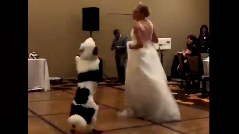 जब दुल्हन के साथ डीजे पर कुछ इस अंदाज में नाचा कुत्ता, देखें ये वायरल वीडियो