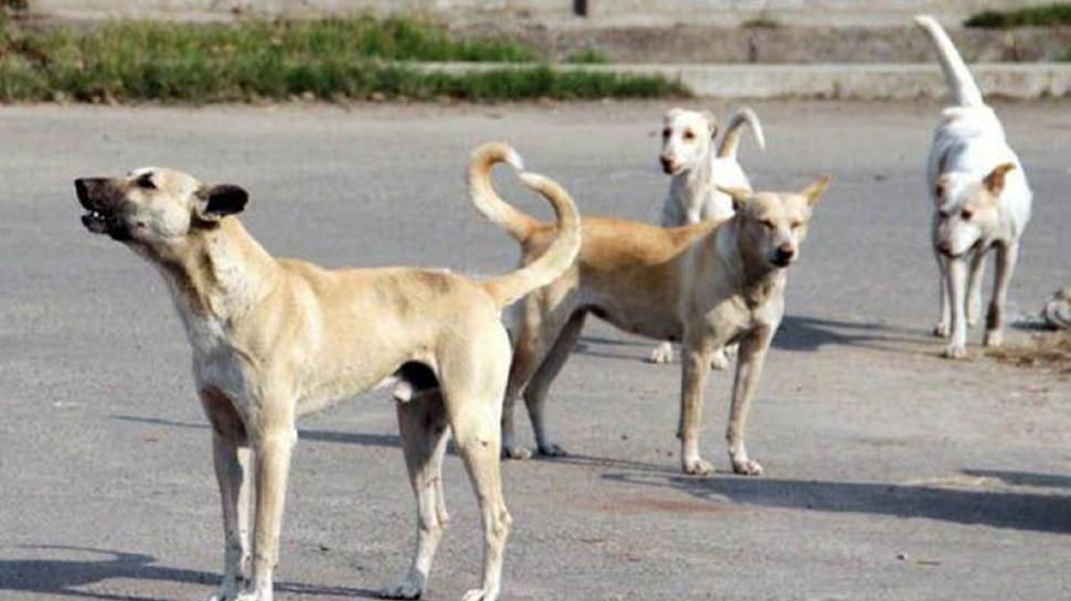सहारनपुर में आदमखोर कुत्तों का आतंक, 4 दिन में 2 मासूमों को बनाया निवाला