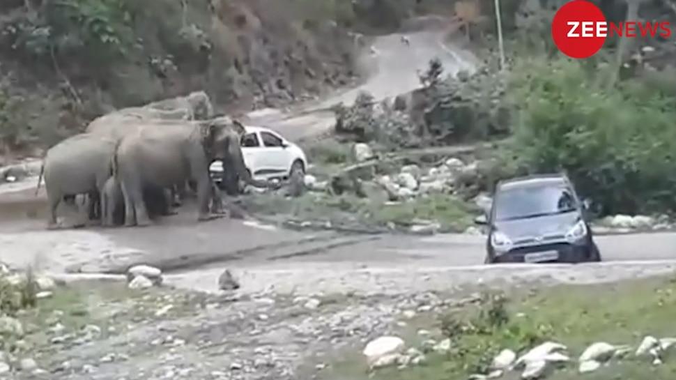 VIDEO: सड़क पर खड़ी थीं पर्यटकों की कारें, आनंद ले रहे थे लोग, तभी जंगल से निकल आए हाथी और...