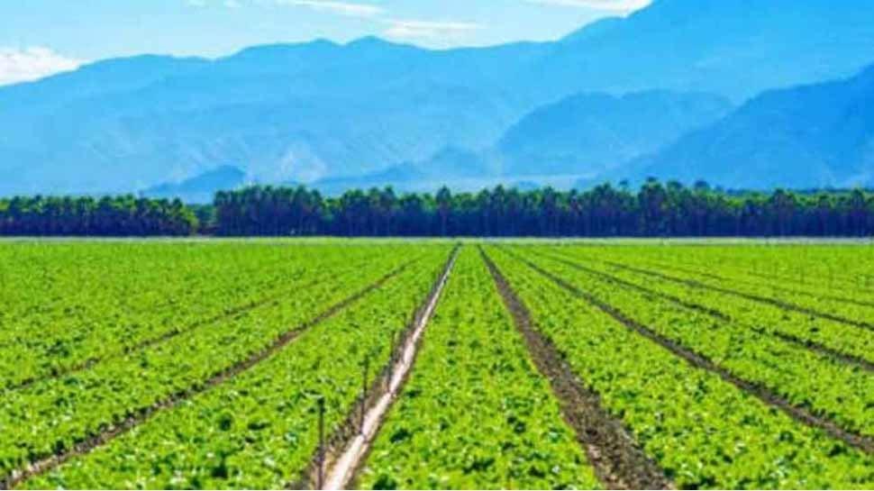 जालोर में रंग लाई युवा किसान की कोशिश, ऑर्गेनिक खेती से हो रही लाखों की कमाई