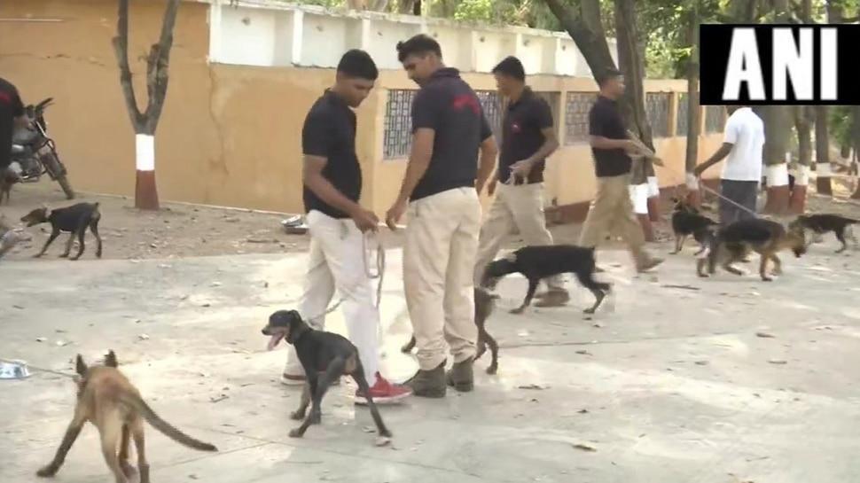 मध्य प्रदेश में प्रशासनिक कर्मचारियों के बाद शुरू हुआ कुत्तों का तबादला, BJP बोली 'हाय रे बेदर्दी'