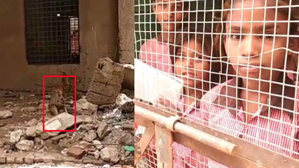 बंदरों का आतंक, बच्चों ने स्कूल आना किया बंद, यहां पड़ोसियों की मदद से आते हैं टीचर