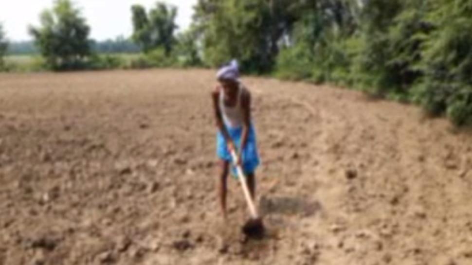 बिहार : कहीं बाढ़, कहीं सुखाड़, बेगूसराय में किसान कम बारिश से परेशान