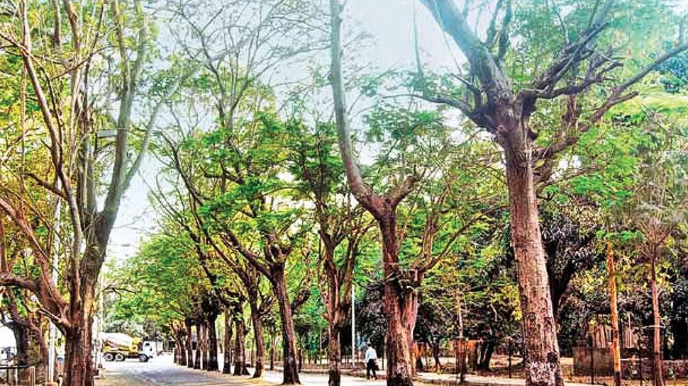 जालौर: ठेकेदार ने वन विभाग के सैंकड़ों पेड़ों का किया नुकसान, नहीं हुई कोई कार्रवाई