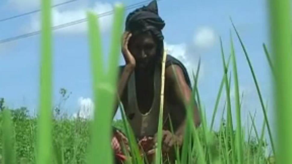झारखंड : बारिश नहीं होने से पलामू के किसान झेल रहे हैं सुखाड़ की मार
