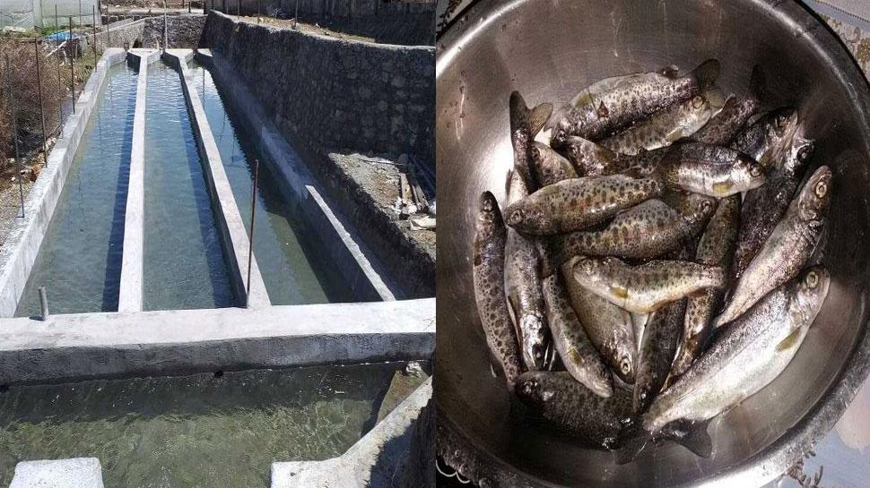 उत्तराखंड में ट्राउट फिशिंग शुरू, 1500 रुपये/किग्रा कीमत की यह मछली कई रोगों की है अचूक दवा