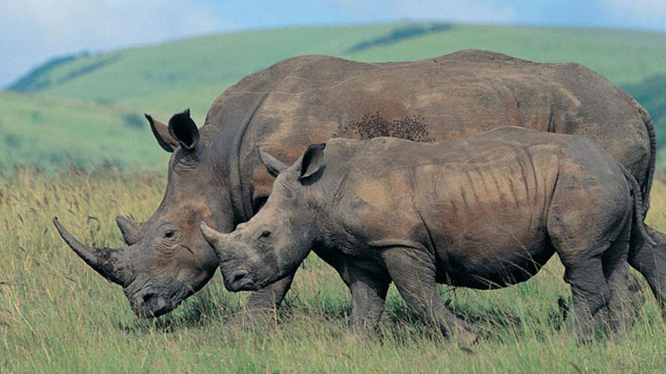 नेपाल नेशनल पार्क 'स्मार्ट पेट्रोल' ऐप के जरिए कर रहा गैंडा संरक्षण