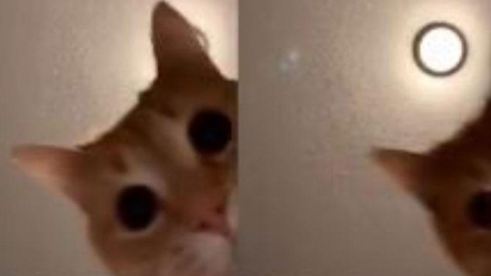 टिक-टॉक से लेकर ट्विटर तक हर जगह छाई हुई है ये बिल्ली, VIDEO देख आप भी कहेंगे 'वाह-वाह'