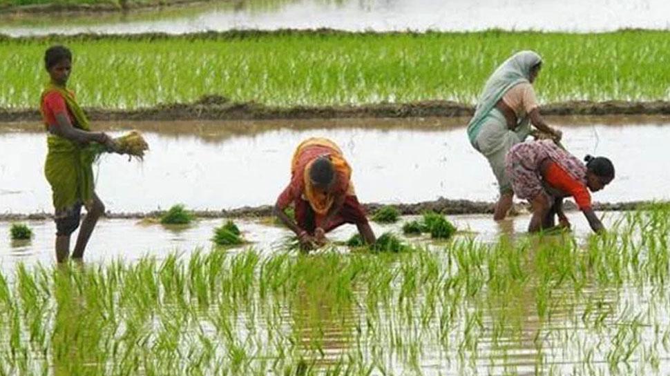 राजस्थान: बारिश के चलते किसानों को हुआ भारी नुकसान, खरीफ की फसलें हुईं खराब